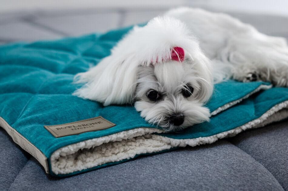 dog bed dreamy mint bowl and bone republic ls3sa blog