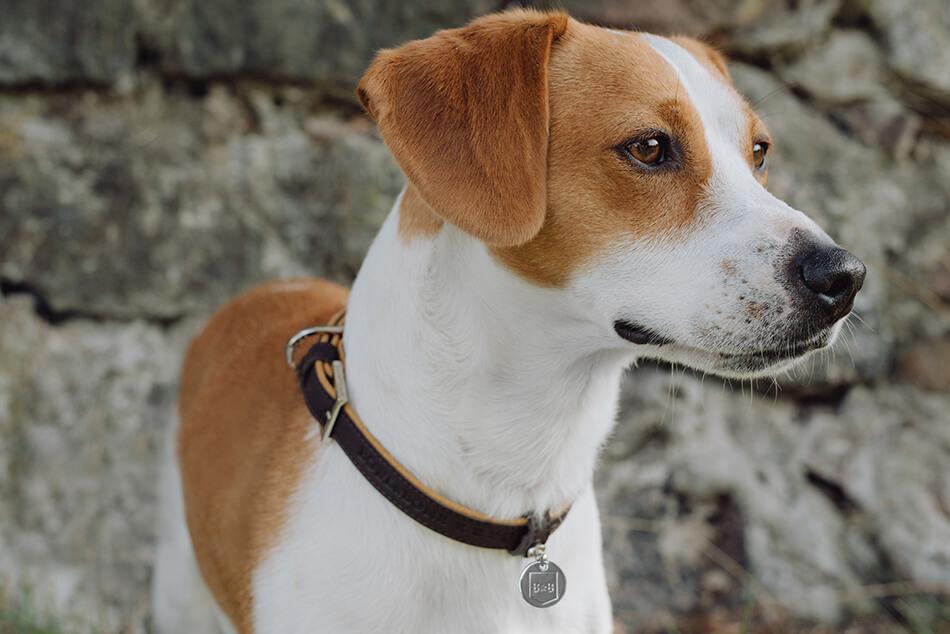 dog collar monaco chocolate bowlandbonerepublic ls3sa