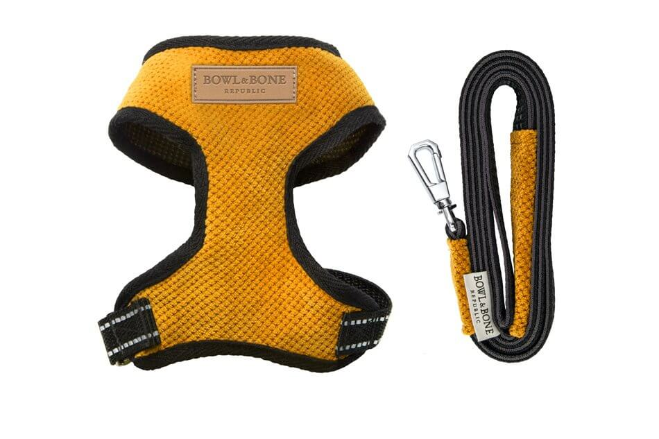 dog harness lead candy yellow bowl and bone republic ps1sa