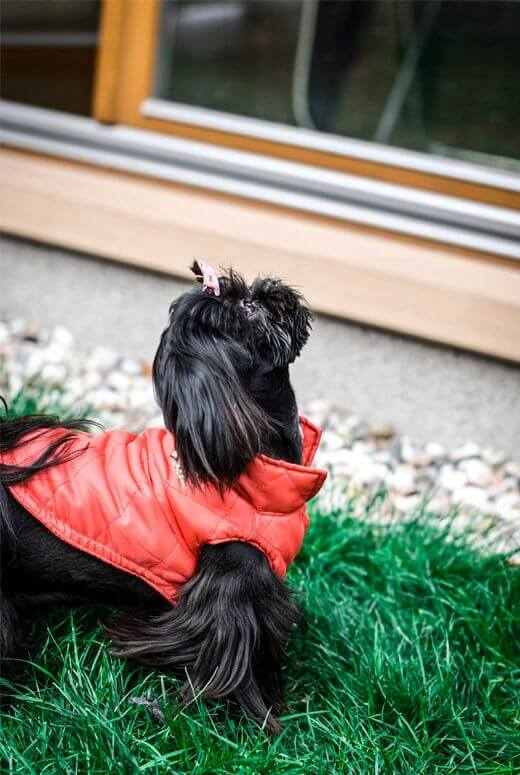 dog jacket spirit red bowl and bone republic ls1sa blog