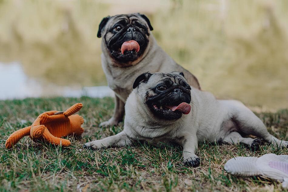 dog toy felix bowl and bone republic ls1sa