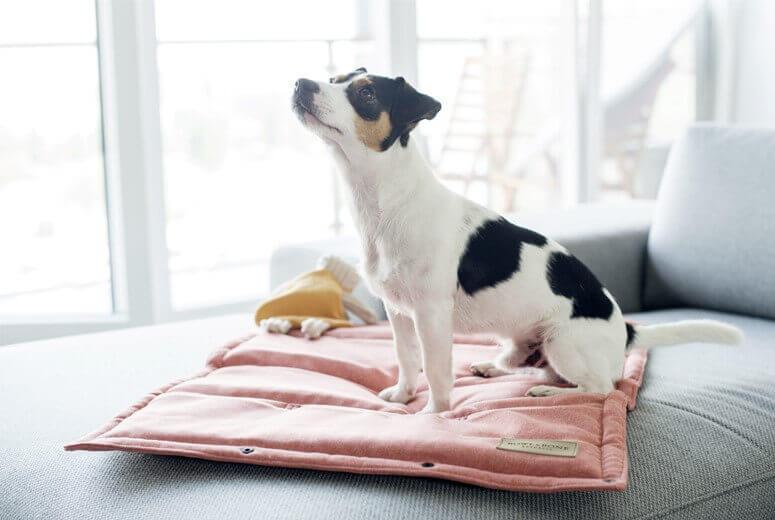 dog mat loft coral bowl and bone republic ls2sa
