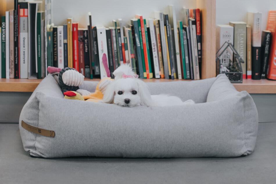 dog bed loft grey toy rex bax duckie bowl and bone republic ls3sa