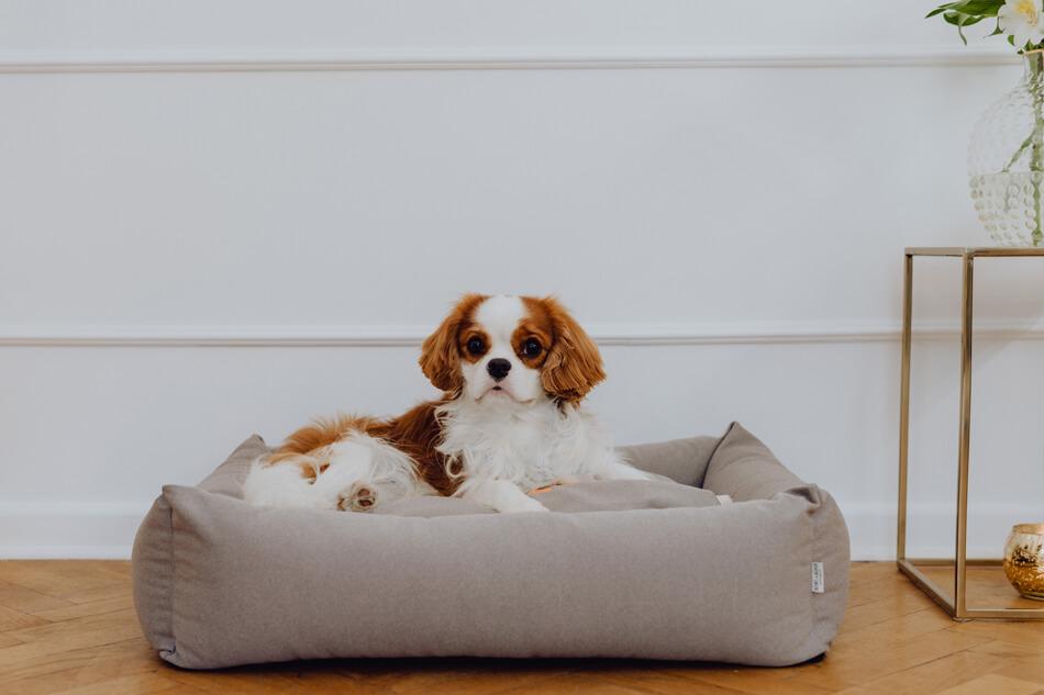 dog bed cosmopolitan platinum bowlandbonerepublic ls1sa