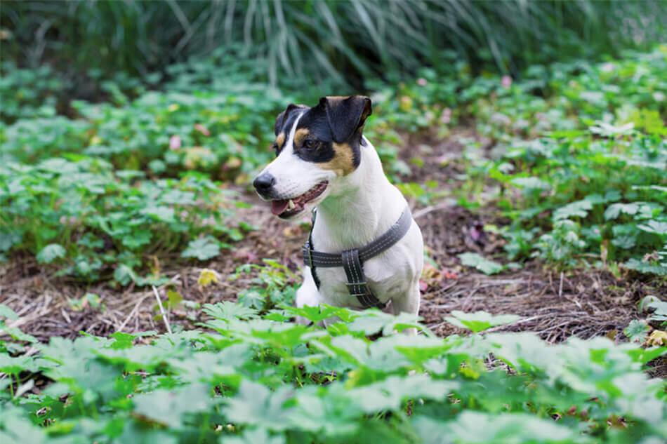 dog harness active grey bowlandbonerepublic