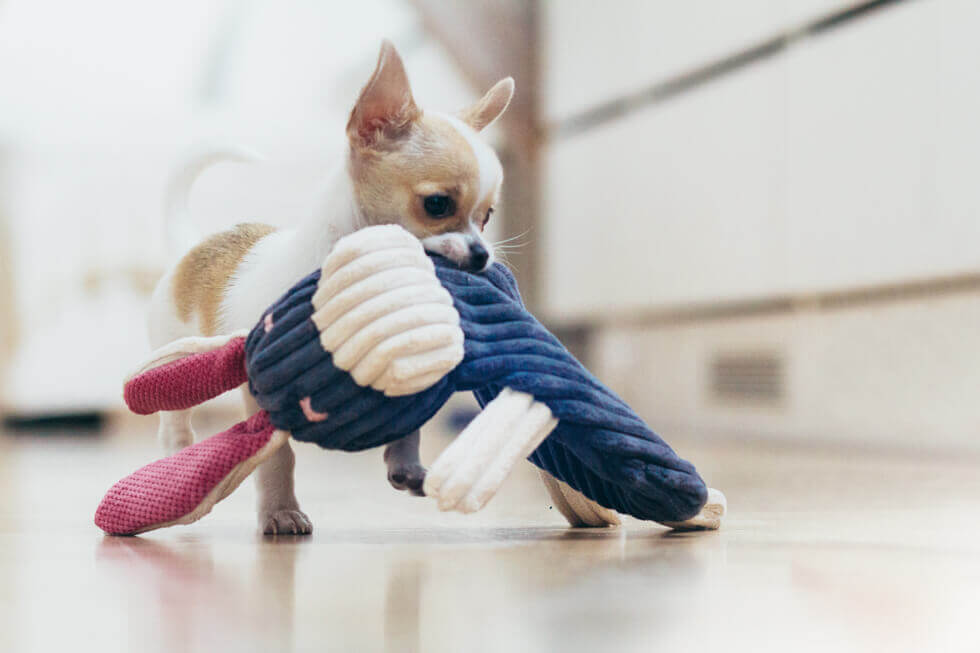 dog toy rex bowlandbonerepublic