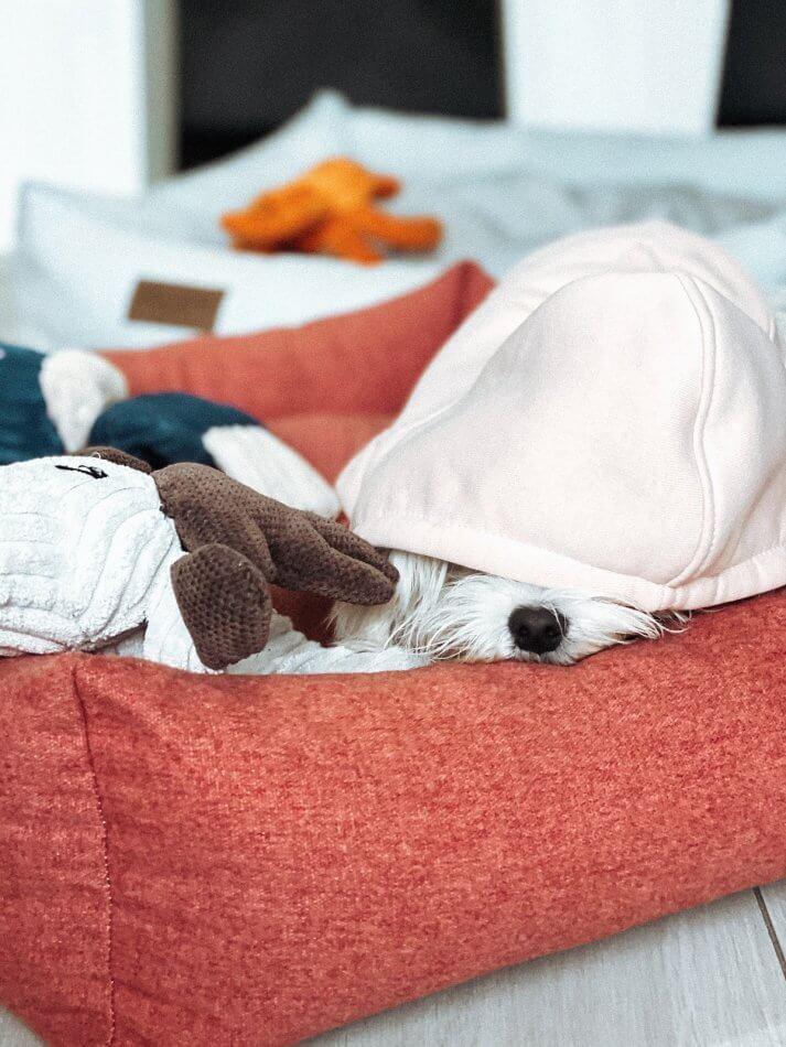 dog bed loft coral hoodie cloud peach bowl and bone republic ls1sa