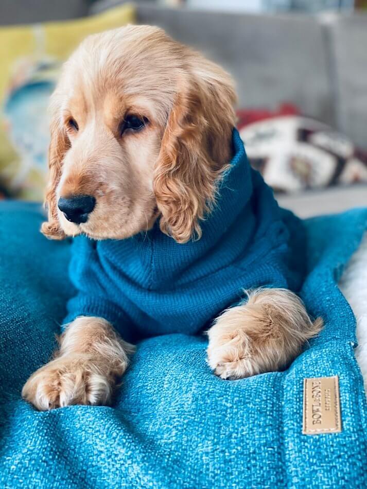 dog sleeping bag bliss ocean bowl and bone republic ls1sa