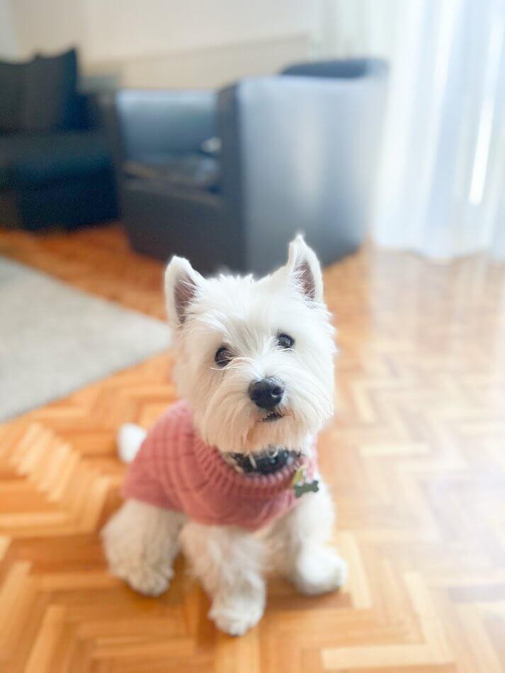 dog sweater aspen pink bowl and bone republic ls7sa.jpg