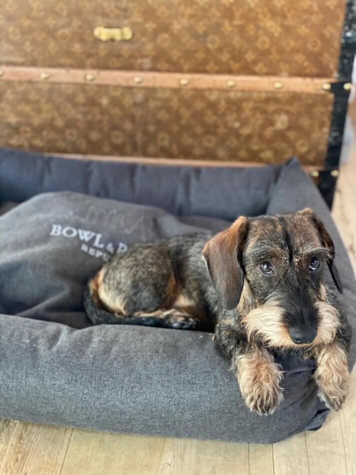dog bed loft graphite bowlandbonerepublic