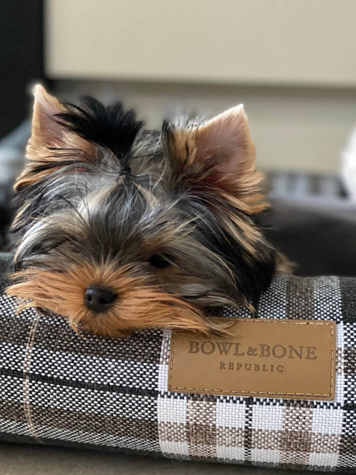 dog bed scott graphite bowl and bone republic ls1sa