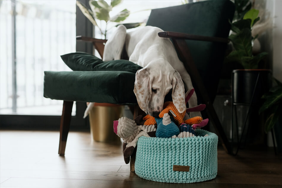 basket for dog toys double mint toy felix toffi roy rex dex bowlandbonerepublic ls1sa