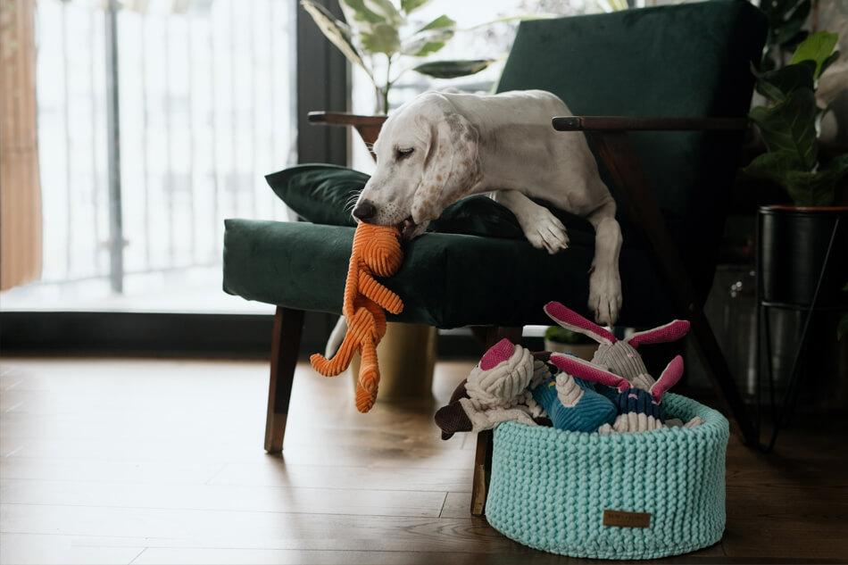 basket for dog toys double mint toy felix toffi roy rex dex bowlandbonerepublic ls2sa
