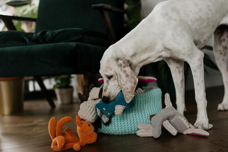 basket for dog toys double mint toy felix toffi roy rex dex bowlandbonerepublic ls3sa
