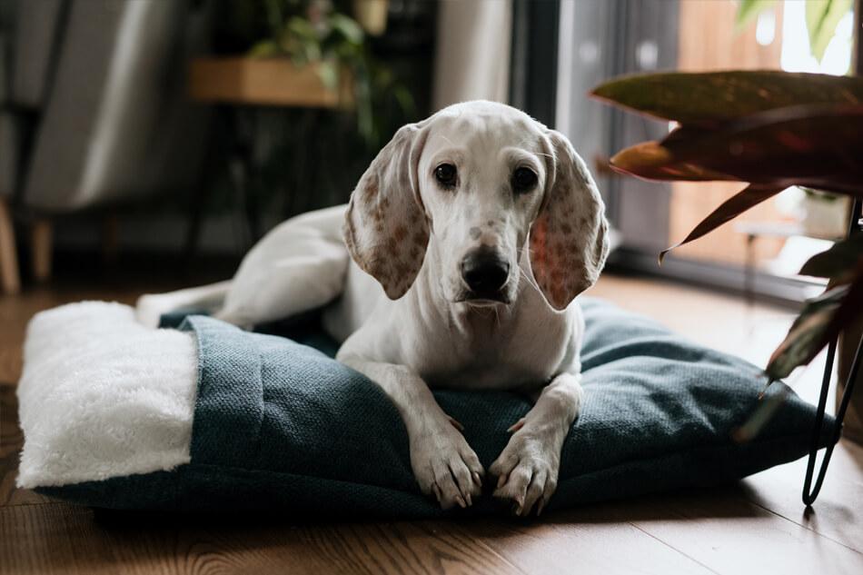 dog sleeping bag bliss green bowlandbonerepublic ls1sa