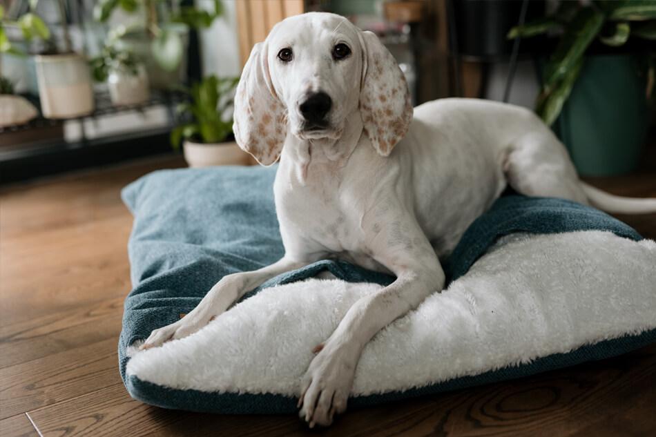 dog sleeping bag bliss green bowlandbonerepublic ls3sa