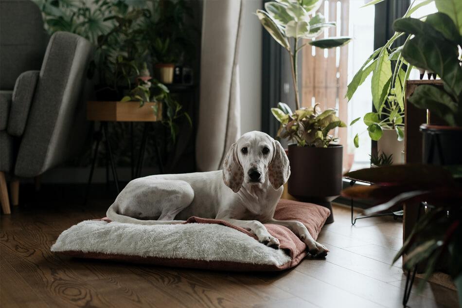 dog sleeping bag bliss pink bowlandbonerepublic ls1sa