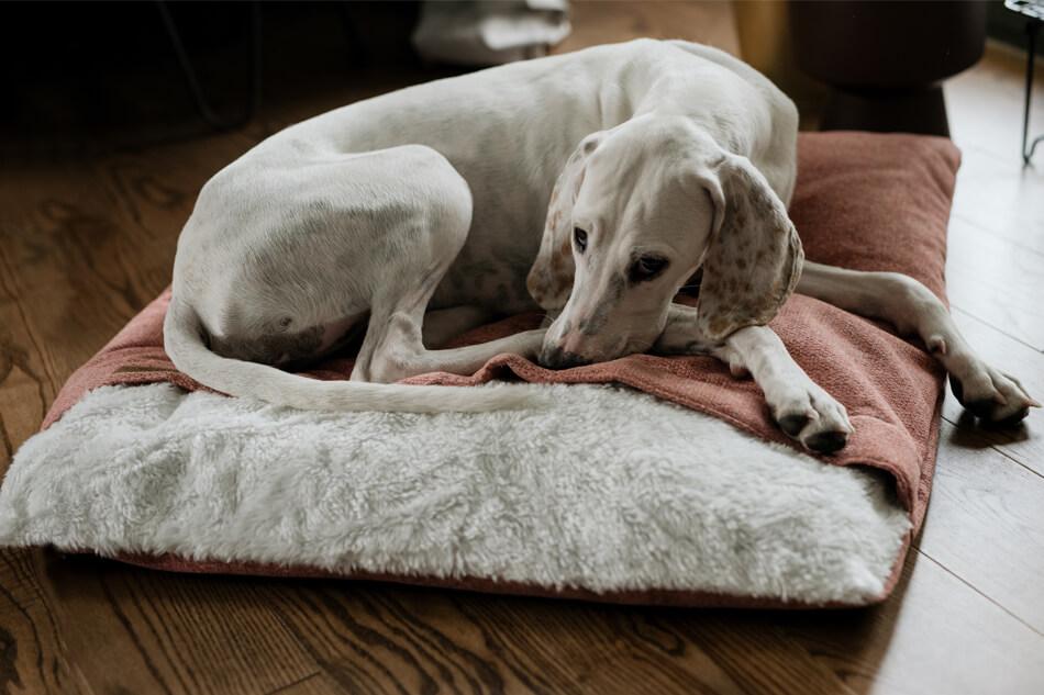 dog sleeping bag bliss pink bowlandbonerepublic ls2sa