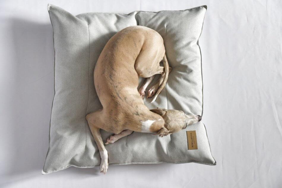 dog cushion pillow urban grey bowlandbonerepublic ps1sa