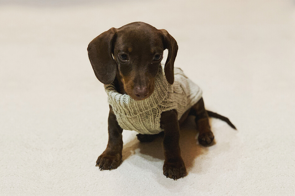 dog sweater aspen cream bowlandbonerepublic ls3sa