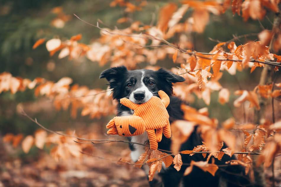 dog toy felix bowlandbonerepublic ls1sa